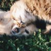 How to Cope with the Loss of a Pet Grief Counseling Center Houston pet loss